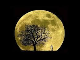 luna-orto-semina.jpg