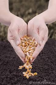semina-grani.jpg