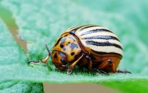 Insetticida biologico per la difesa dell'orto e del giardino