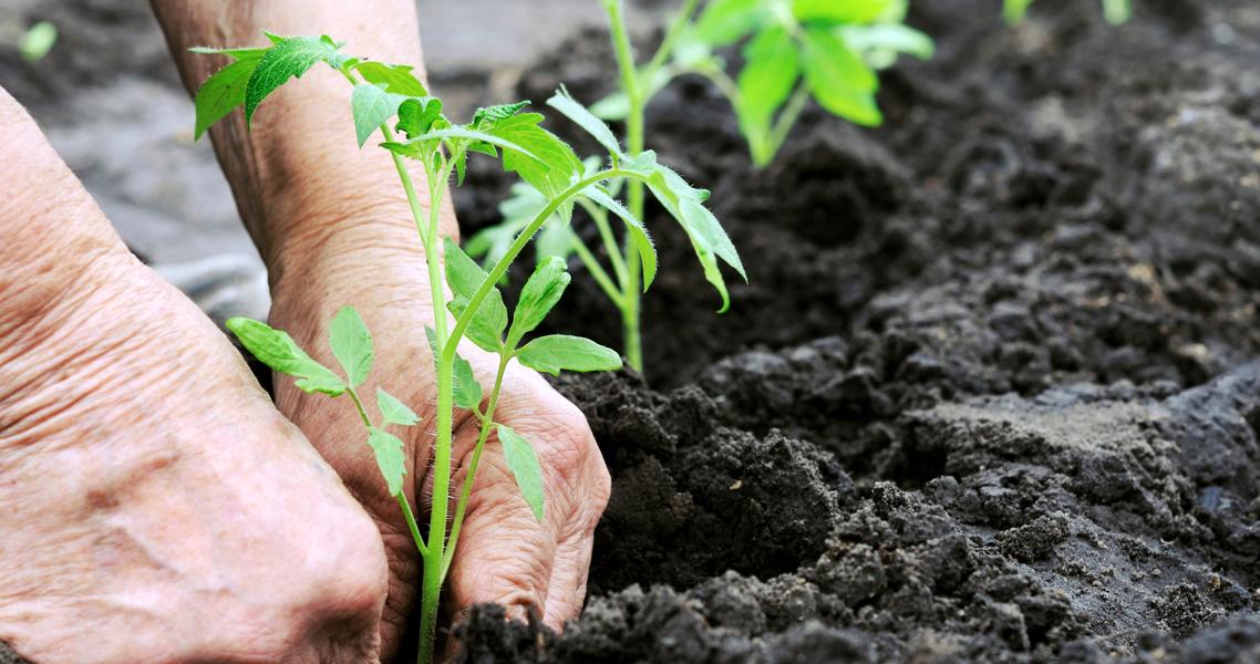 Cura biologica del terreno di giardino e orto